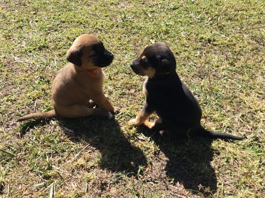 New puppies !